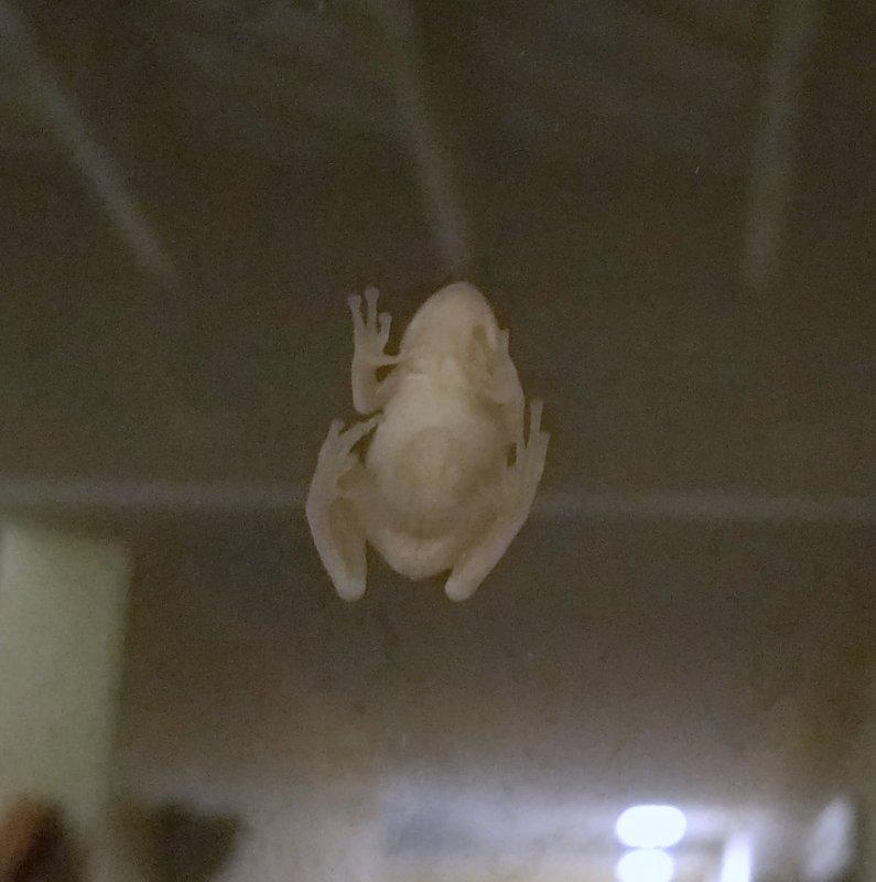 tree frog on house window
